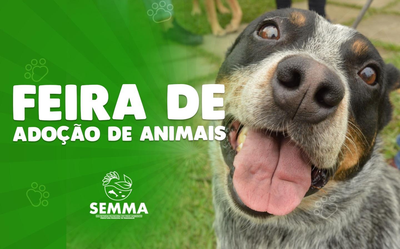 Semma promove neste sábado feira de adoção de animais no Aeroparque