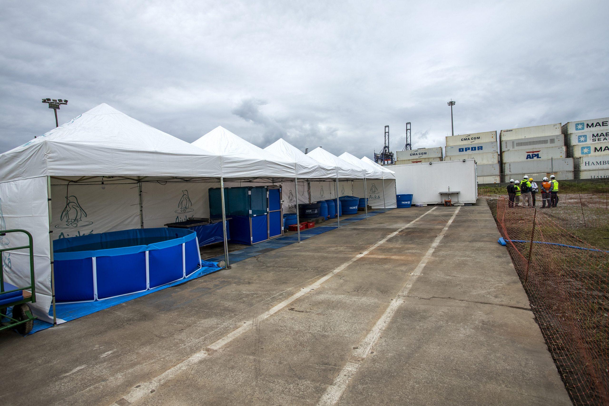 Portos do Paraná instala unidade móvel de prontidão para atender animais durante derrocagem