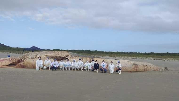 IAT orienta população a não mexer na baleia morta encontrada na Ilha do Mel