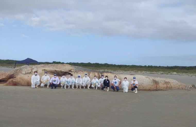 Baleia de quase 20 metros é encontrada morta na Ilha do Mel